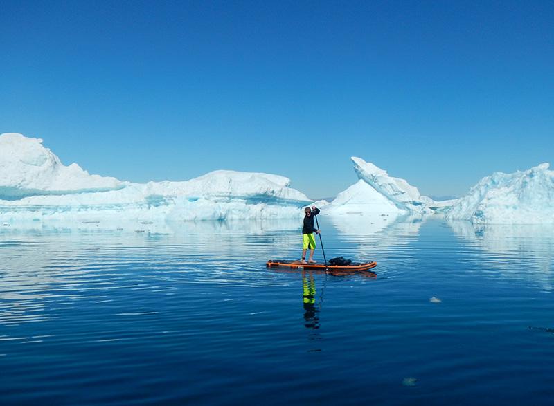 polar bears and paddleboards