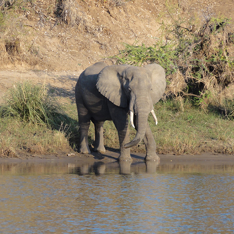 Zambezi Canoe Challenge